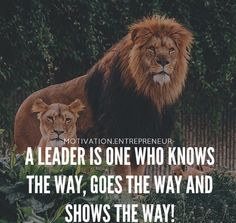 If you want to be a lion you must train with lions popular quotes fandeluxe Choice Image