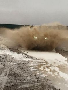 jeep.. or a reeeally big MAD cat! ;)