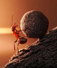 La vie secrètes des fourmis – 18 nouvelles photographies incroyables d'Andrey Pavlov