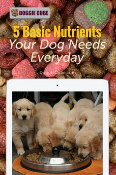 Your dog needs the essential nutrients to grow, go, and glow. Just like humans, your dog needs sufficient nutrition to be healthy. Here're some tips on what basic nutrients your dog need everyday. Dog Nutrition, Dog Diet, Guide Dog, Medical Problems, Dog Care Tips, Homemade Dog Food, Dog Grooming, Dog Owners, Dog Training