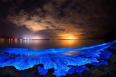 Bioluminescent plankton in Jervis Bay, Australia. Great Smoky Mountains, Jervis Bay Australia, Cairns Australia, South Australia, Bioluminescent Plankton, Bioluminescent Bay Puerto Rico, Porto Rico, Toyama, Natural Disasters