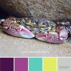 Crab Photo Print: lined striped shore crab tidepool sea image 3 Color Schemes Colour Palettes, Colour Pallette, Color Combinations, Color Turquesa, Creative Colour, Design Seeds, Colour Board, Color Stories, Color Of Life
