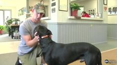 Dog Walks 500 Miles To Find His Owner on http://news.petpardons.com