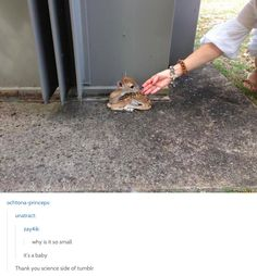 Thank you, science tumblr - 48 Times Tumblr Was Funny About Animals