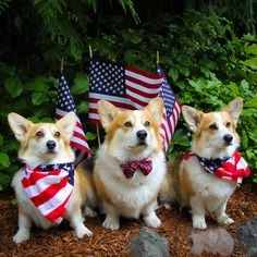 Happy Fourth of July everyone!
