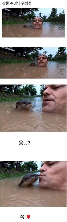 Animals And Pets, Funny Animals, Cute Animals, Punny Puns, Sad Stories, Cute Creatures, Mbti, Memes, Humor
