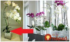 Archívy Dom & záhrada - Page 10 of 262 - To je nápad! Floral Arrangements, Orchids, Glass Vase, Plants, Home Decor, Vases, Decoration Home, Room Decor, Flower Arrangement