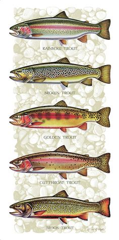 Five Trout Panel Painting - Five Trout Panel Fine Art Print. Really nice fish art! Trout Fishing Tips, Fly Fishing Gear, Gone Fishing, Bass Fishing, Fishing Stuff, Fishing Basics, Fishing Knots, Fishing Meme, Fishing Chair