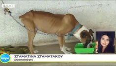 200 ζώα στο δρόμο με απαίτηση των ιδιοκτητών αυθαιρέτων και τη συνδρομή της πολιτείας   Editors