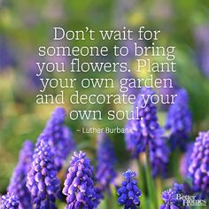 Garden Quotes Don't wait for someone to bring you flowers. Plant your own garden and decorate your own soul. -Mario Quintana The post Garden Quotes appeared first on Diy Flowers. Great Quotes, Quotes To Live By, Inspirational Quotes, Uplifting Quotes, Inspiring Sayings, Funny Quotes, Motivational, Time Quotes, Truth Quotes