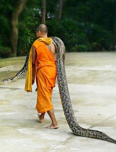 Cool Pin By  .... Stunning Pin By  .... A monk and sanke at the Wat sri radta-na-ram (Bangpang) temple in the Nonthaburi province of Thailand