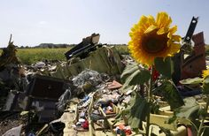 Rebels Prevents Access to MH 17 Via Landmines. This photo shows more of the MH 17 crash. The plane fell on a field of sunflowers. Families of the victims are urged not to visit the crash site. If the UN can't make it, then it will be dangerous for you to do so.