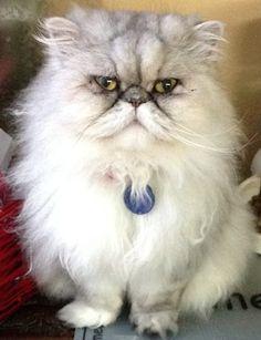 My cat Pansy Rose. Allison, Portland, Oregon. 12/18/12.