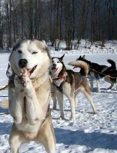 Please let's goooo! I want to runnn!!