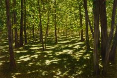 April Gornik - Green Shade