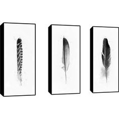 Feathers Framed Print (Set of 3)