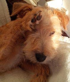 High five Wilfie pup