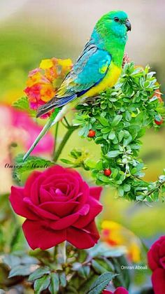 1 million+ Stunning Free Images to Use Anywhere Colorful Parrots, Colorful Animals, Colorful Birds, World Birds, All Birds, Beautiful Flower Drawings, Beautiful Roses, Bird Pictures, Nature Pictures