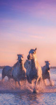 Cute Horses, Pretty Horses, Horse Love, Nature Animals, Animals And Pets, Cute Animals, Horse Wallpaper, Animal Wallpaper, Iphone Wallpaper