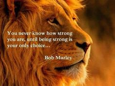 For all my Lionhearts... you're my Heros. #bobmarley