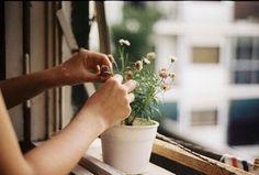Ilgın'ın çiçekleri.