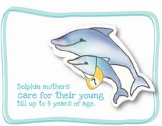Cool dolphin facts