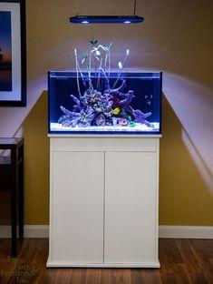 Innovative Marine 25 Gallon Fusion Lagoon Aquarium w/ High Gloss Stand