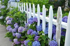 picket fence flower designs - Google Search