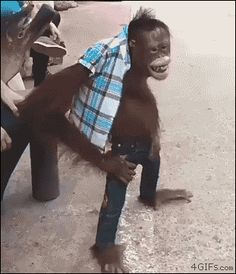 Monkey GIF - Funny Monkeys - Funny Monkeys meme - - Monkey GIF Monkeys Funny Monkey GIF The post Monkey GIF appeared first on Gag Dad. The post Monkey GIF appeared first on Gag Dad. Animals And Pets, Funny Animals, Cute Animals, Funny Videos, Monkey Gif, Funny Jokes, Hilarious, Funny Monkey Memes, Funny Gifs