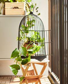 A decorative birdcage displays a potted vine plant.