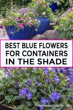This list of blue container plants for the shade is the BEST! I have so much sha This list of blue container plants for the shade is the BEST! I have so much sha Blue Plants, Tall Plants, Shade Plants, Shade Annuals, Container Gardening Vegetables, Container Plants, Shade Garden, Garden Plants, Flowering Plants