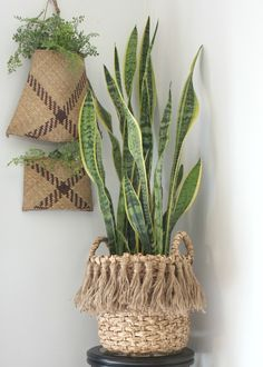 updated a plain basket by adding some jute tassels. mother in law tongue or snake plant thrives in low light with low water. Decoration Plante, Plant Basket, Deco Boheme, Baskets On Wall, Wall Basket, Baskets For Plants, Ikea Basket, Snake Plant, Simple House