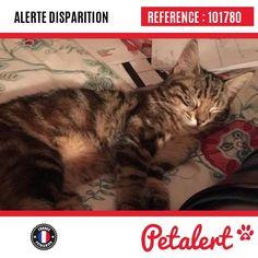 12.09.2016 / Chat / Fierville-les-Parcs / Calvados / France