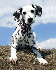 #Dog April 2008 Photo Contest... Like,Repin,Share, Thanks!