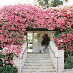 I want to live in a house covered in bougainvillea... #homesweethome #ladolcevita