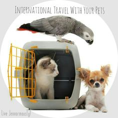 Your only option might be to take them along with you on international travel!