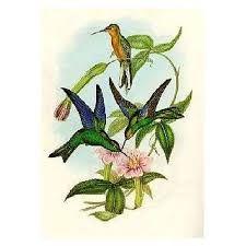 beija flores do Brasil - Pesquisa Google