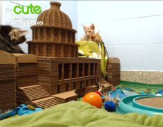 Too Cute Kitten Cam KittyBlock Capital Building