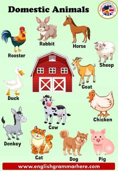 Pet Animals Name in English Learning For Kids Animals