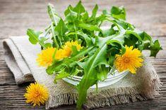 Il tarassaco comune (Taraxacum officinale) è un'erba che possiede molte proprietà benefiche, ma va assunta nelle dosi giuste altrimenti può causare effetti indesiderati. In questo articolo: benefici, dosaggi giornalieri e controindicazioni.