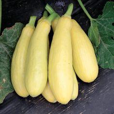 National Acorn Squash Day | veg pics | Squash seeds ...
