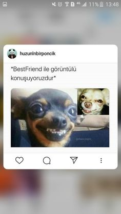 Best Frends, Ridiculous Pictures, Tumblr Boys, Best Friends Forever, Funny Facts, Bff, Harry Potter, Mood, Memes