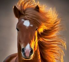 Ce cheval fera bien une pub pour cheveux