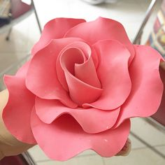 Pink rose on today's lesson