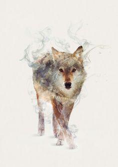 Wolf Watercolors