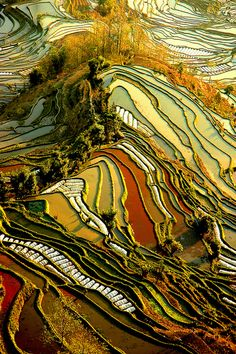 Yuanyang Rice Terraces in Yunnan, China (by ichauvel).