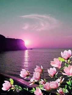 Just pictures ; beautiful and lovely friends no nudity and erotic pictures Beautiful Sunset, Beautiful World, Beautiful Images, Beautiful Flowers, Beautiful Scenery, Beautiful Things, Nature Pictures, Amazing Nature, It's Amazing
