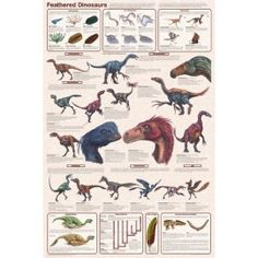 A great poster of Feathered Dinosaurs! Science suggests that modern-day birds evolved from these prehistoric reptiles. Check out the rest of our amazing selection of Dinosaur posters! Need Poster Mounts. Dinosaur Facts, Dinosaur Posters, Dinosaur Fossils, Feathered Dinosaurs, Dinosaur Pictures, Dragons, Prehistoric Creatures, Prehistoric Dinosaurs, Extinct Animals