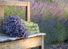 Growing lavender has turned into a business for one woman, as she makes and markets lavender essential oil, dried lavender and more. Growing Lavender, Provence Lavender, Herb Farm, Farm Projects, Small Group Tours, Lavender Fields, Flower Farm, Farm Gardens, Plantation