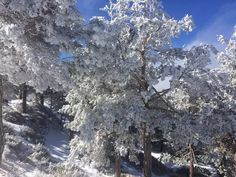 Originally shared by Spanish Highs Mountain Guides. Frosted trees, Loma de Tres Mojones, Cerro de Caballo today. Still a winter wonderland in the Sierra NevadaPhoto